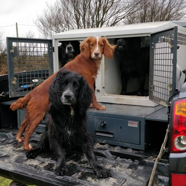 Dog Box UK offers quality and affordable K9 Transportation solutions made in Holsworthy, Devon. Designed to keep your dogs safe and comfortable during transit